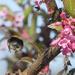 Bum of the flightlebee by janturnbull