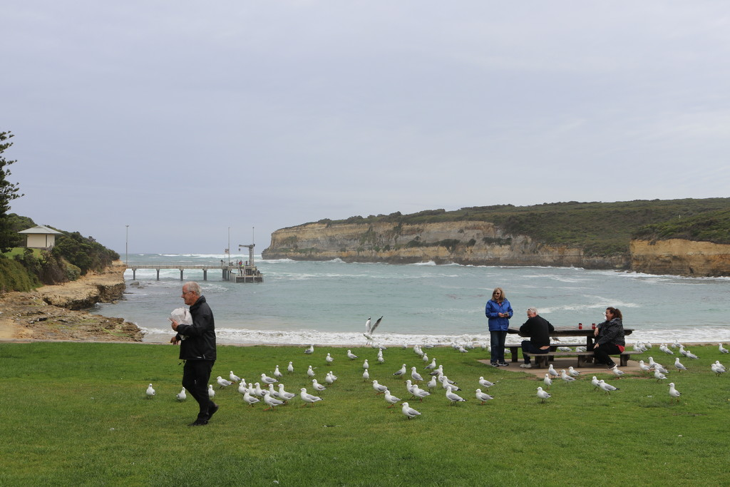 The Pied Piper of Port Campbell by gilbertwood