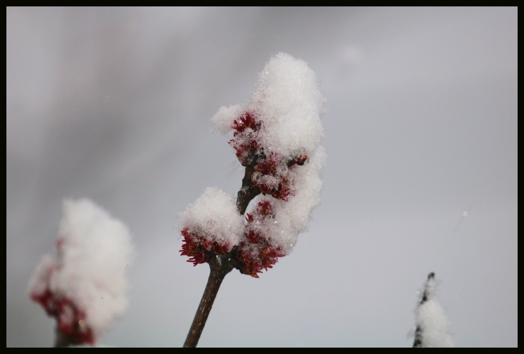 Spring snow by ladykassy46