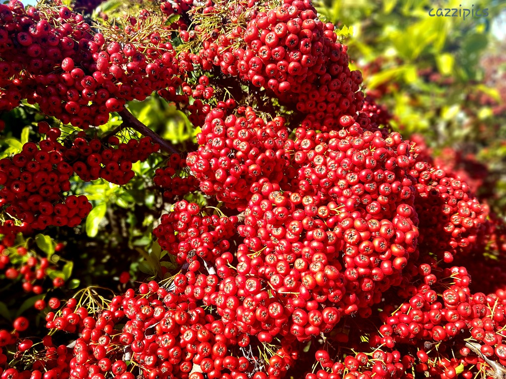 Red Berries by serendypyty