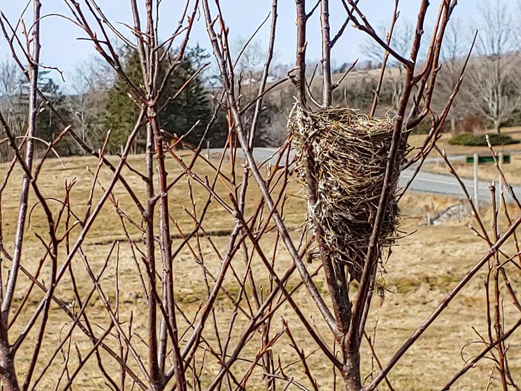 Birds Nest by kfpartist