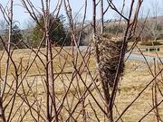 23rd Mar 2020 - Birds Nest