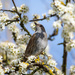 Spring is here by stevejacob