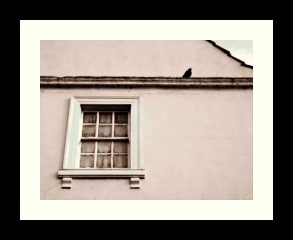 Social Distancing (Pigeon Style)  by ajisaac
