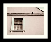 23rd Mar 2020 - Social Distancing (Pigeon Style)