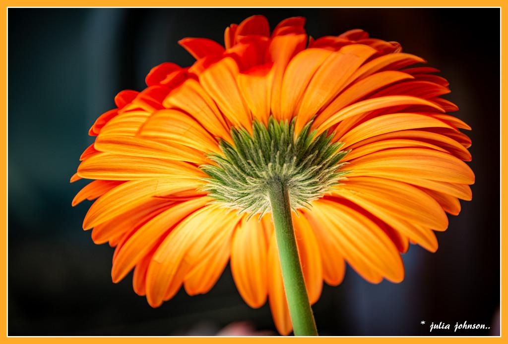 Rainbow Month  .. Orange #4 by julzmaioro