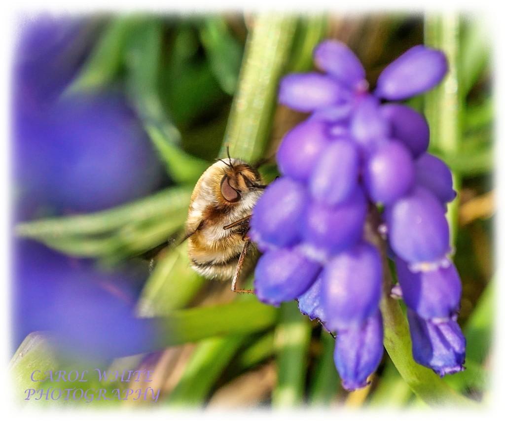 Busy Little Bee by carolmw