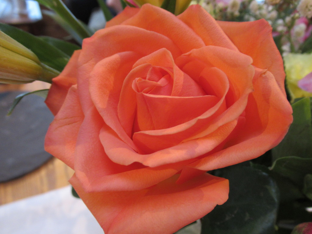 Orange rose.... by bruni