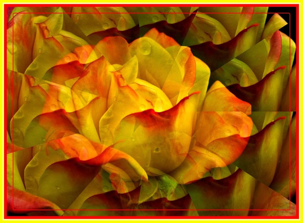 Rose-petals Confetti  by beryl