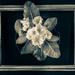 primrose monochrome