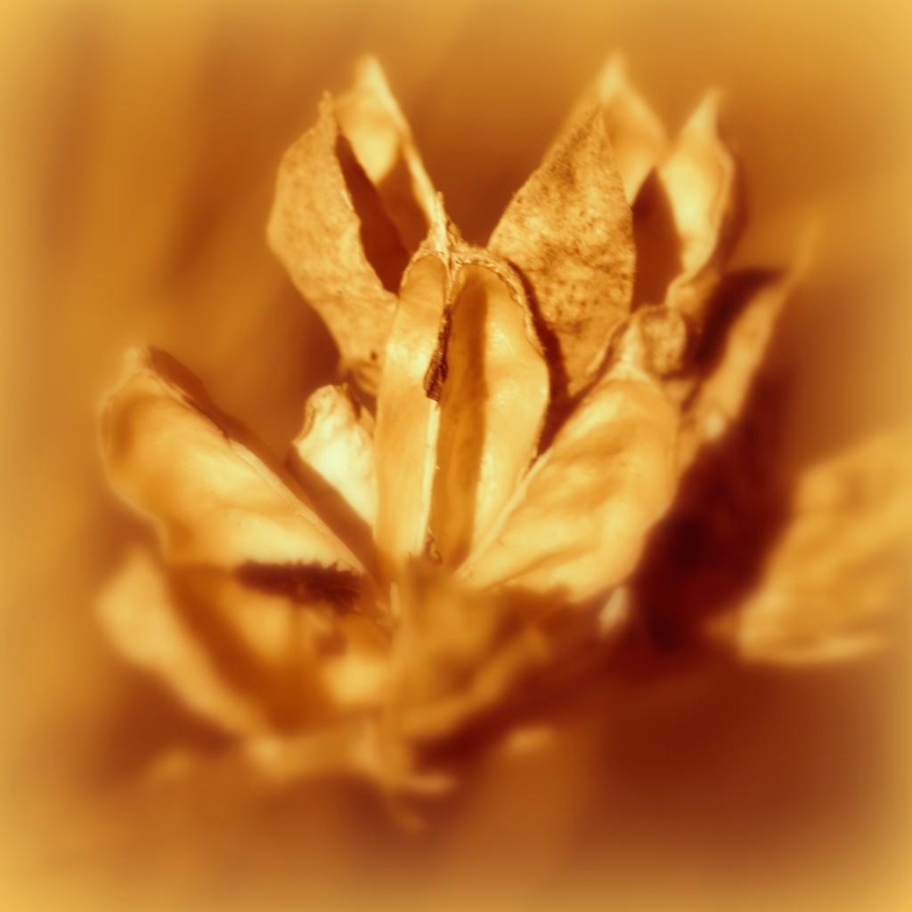Orange 3 by genealogygenie