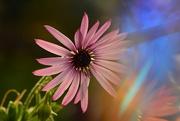 24th Mar 2020 - Jazzy daisy..........
