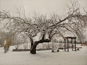24th Mar 2020 - Winter is Back
