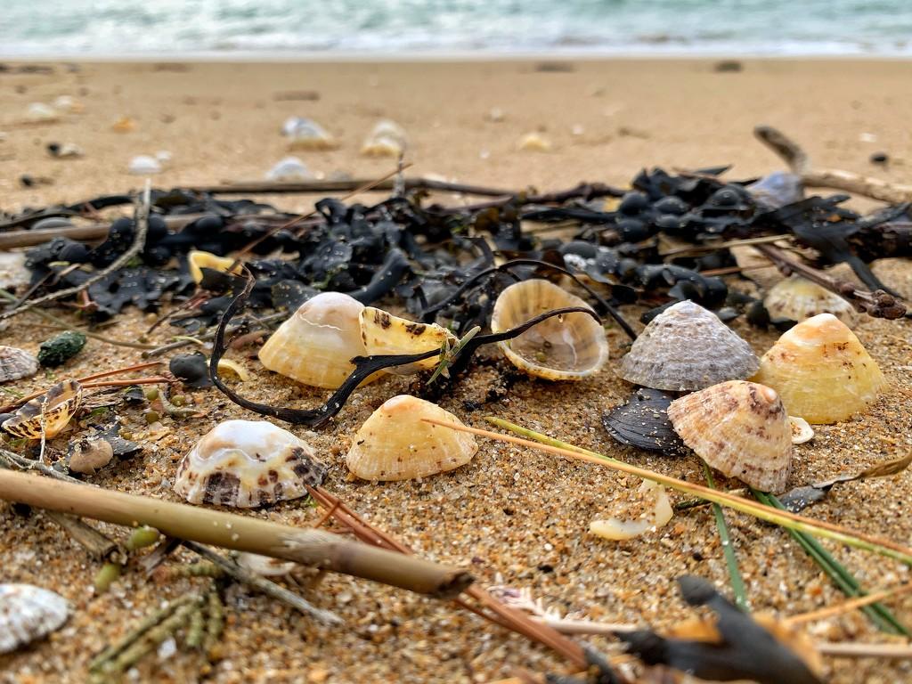 Shells and Algae.  by cocobella