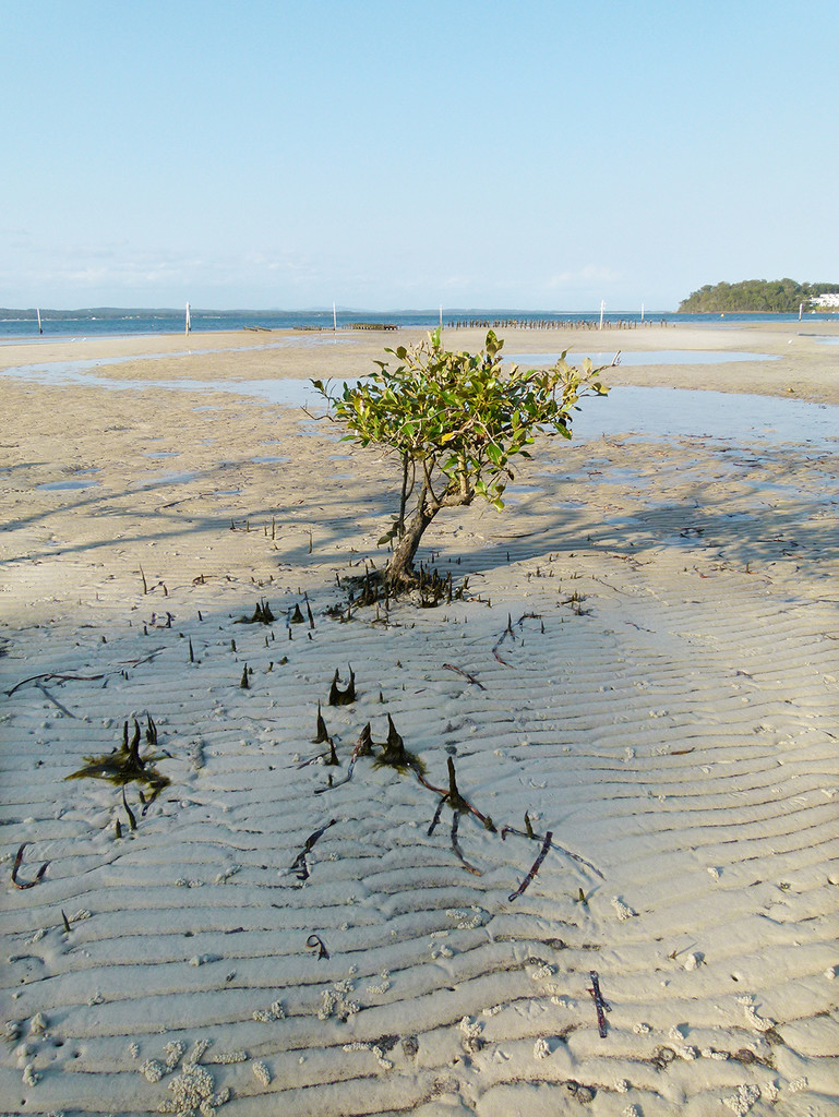 Baby Mangrove by onewing
