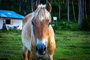 20th Mar 2020 - Pony