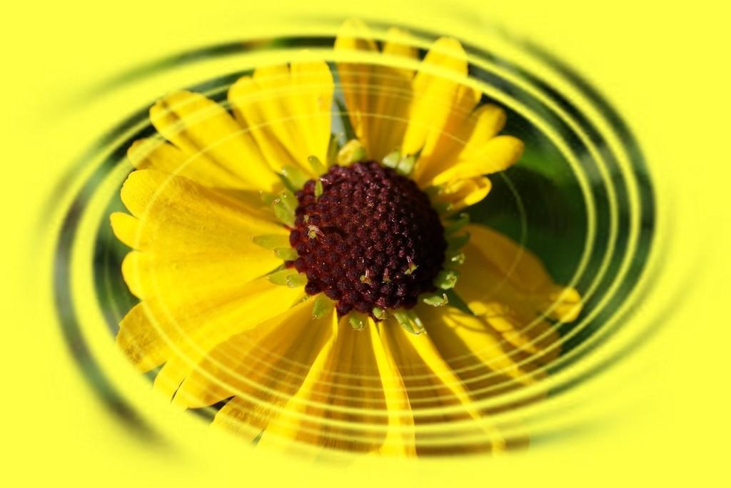 luminous in yellow by quietpurplehaze