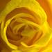 Yellow #4