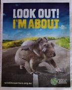 26th Mar 2020 - Koala Awareness ~