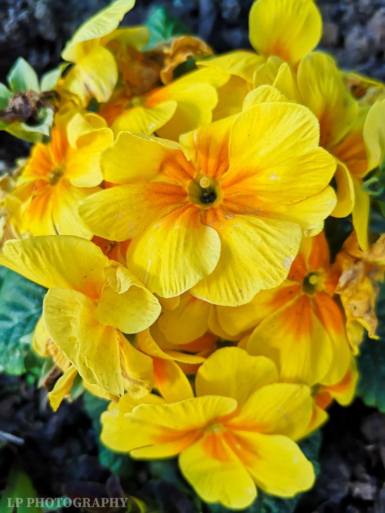 Sunshine Flowers by tiredpanda