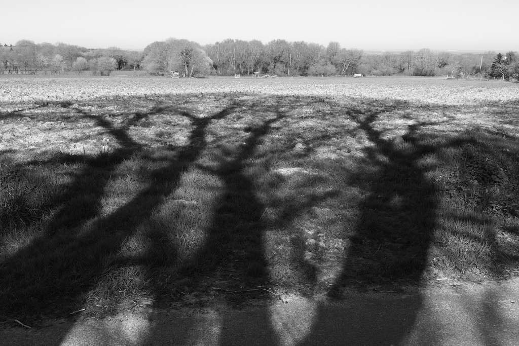 Sentinel Shadows? by s4sayer