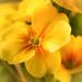 sunny happy yellowness