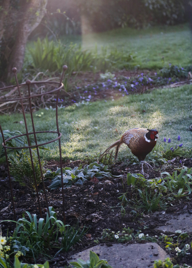 Early morning visitor by nicolaeastwood