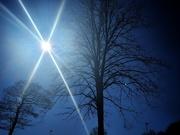 25th Mar 2020 - Sunny trees, Sheffield