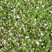 GREEN Spring Grass