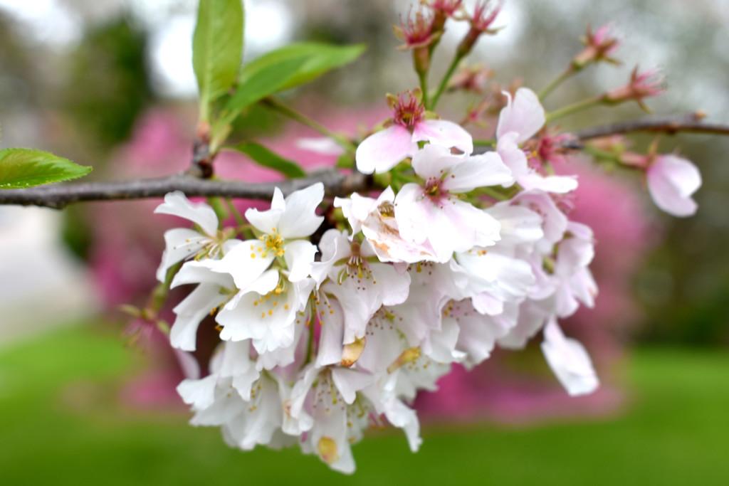 Spring Mullet! by homeschoolmom