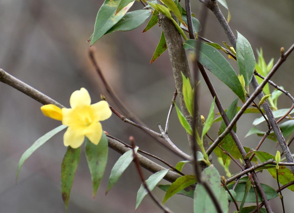 Yellow Flower by homeschoolmom