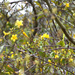 Yellow flowers in a tree