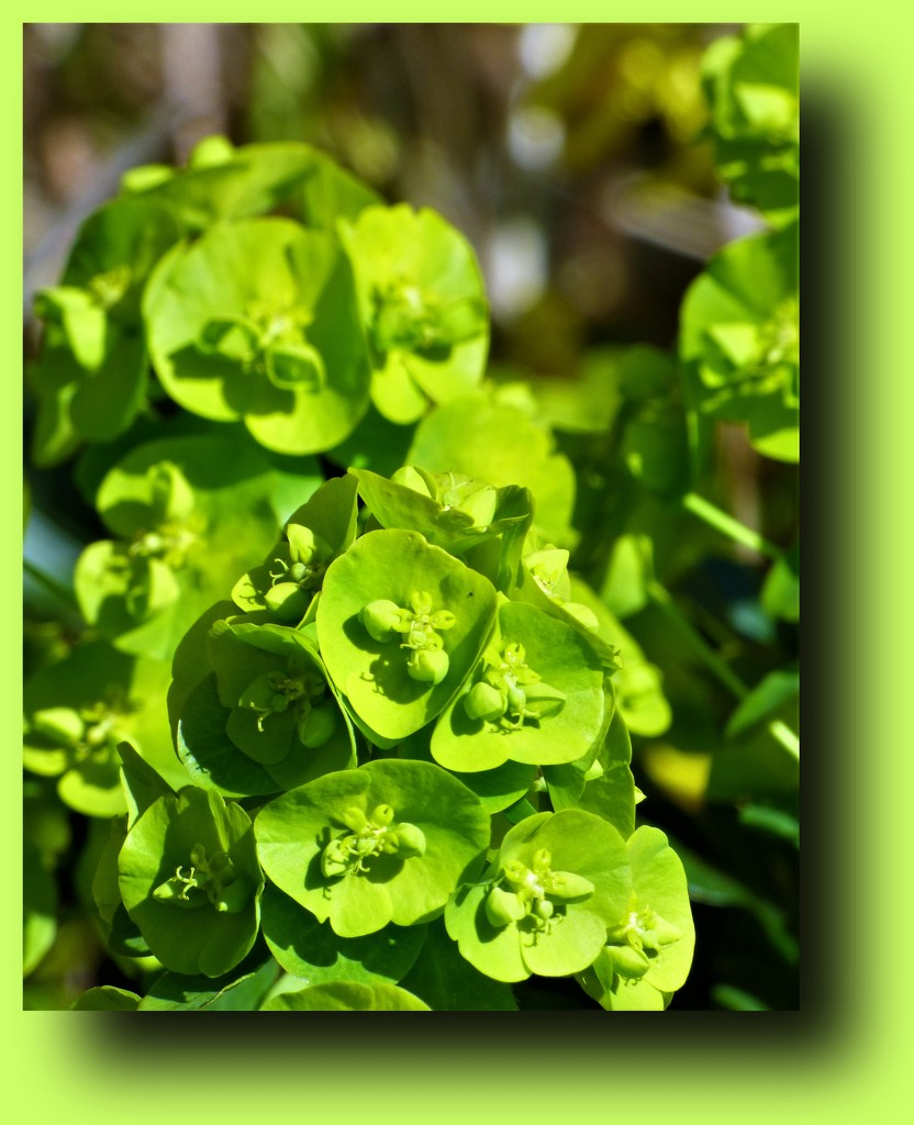 Fresh Spring green  by beryl