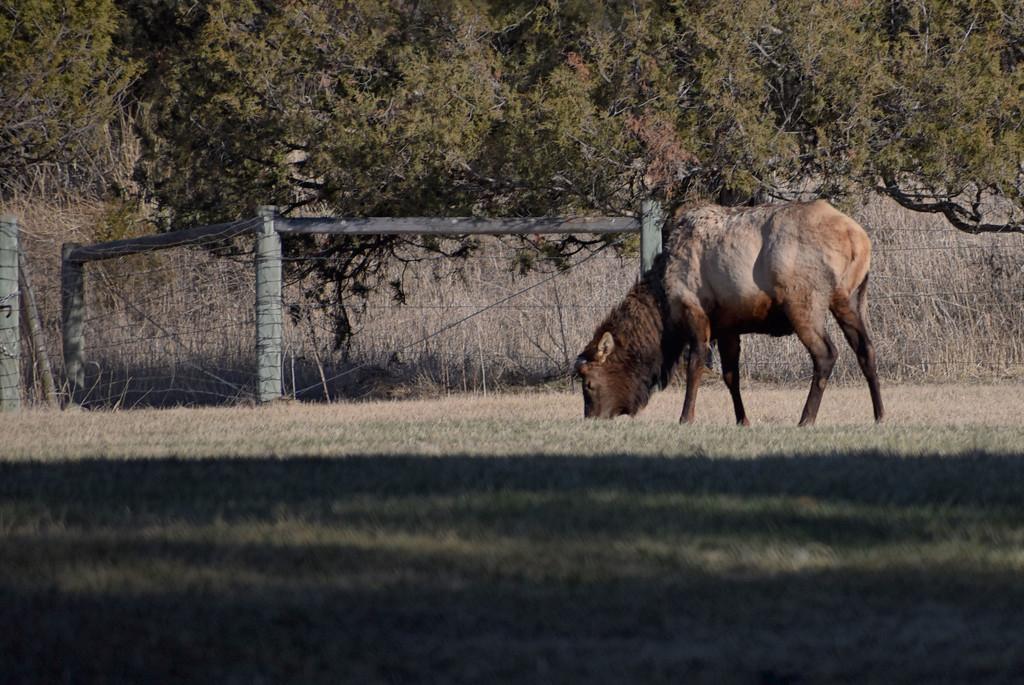 Elk At Bison Range Picnic Area by bjywamer