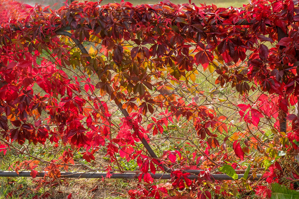 Autumn on a gate by maureenpp