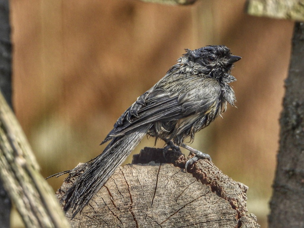 bedraggled  by amyk