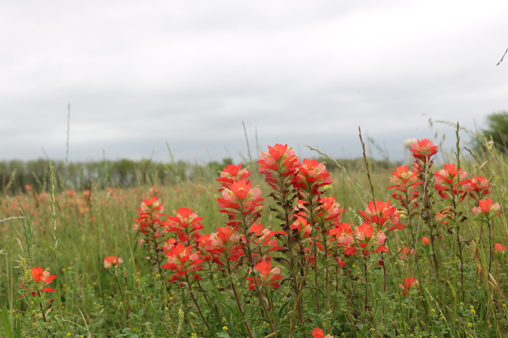 Indian Brush by momamo