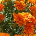 Clusters of Orange