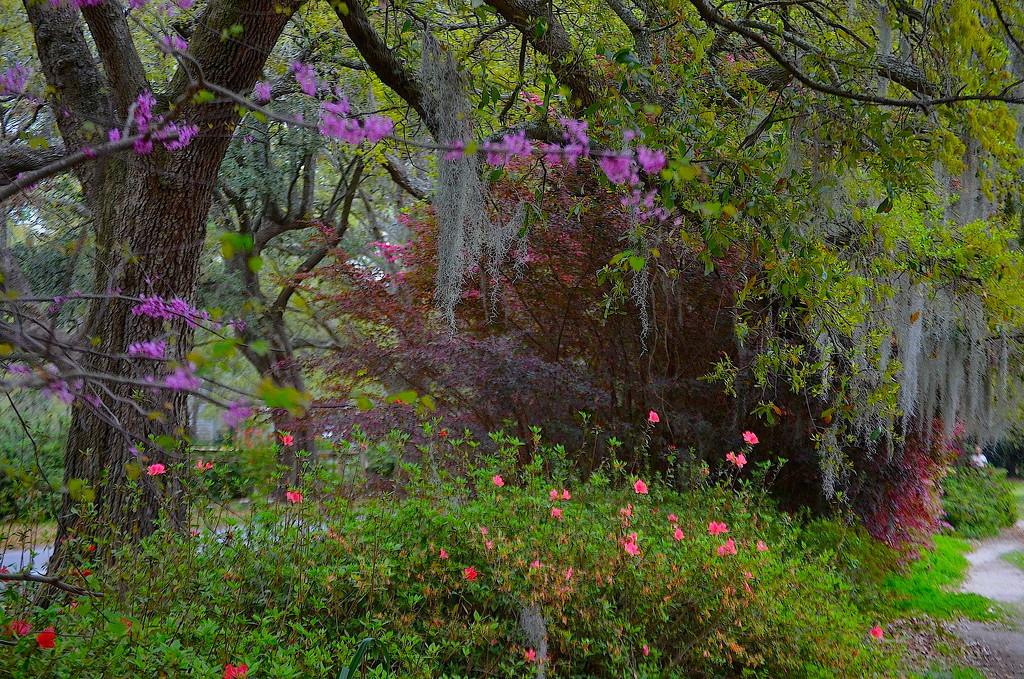 Spring at Hampton Park, Charleston, SC by congaree