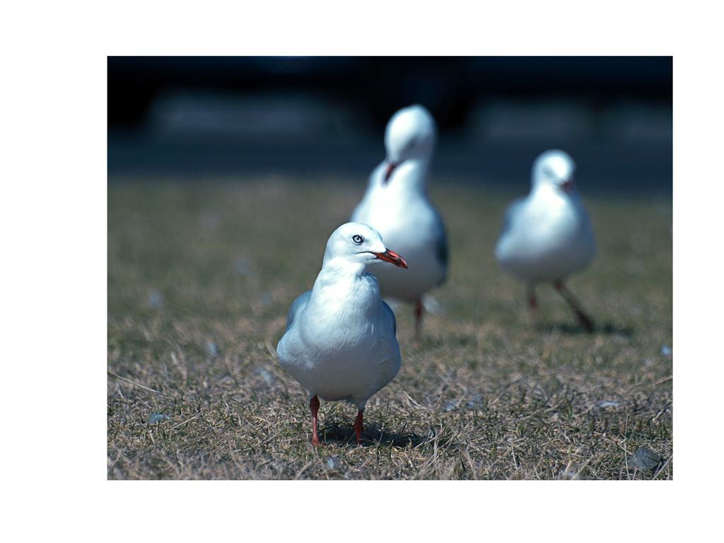 Hopeful seagulls by suez1e