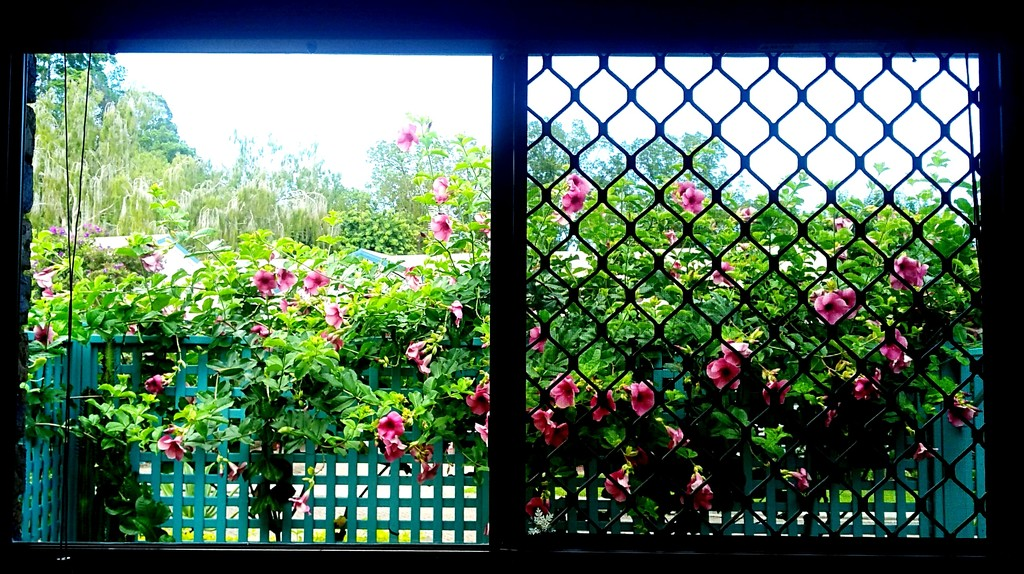 View through my kitchen window after cleaning the window by 777margo