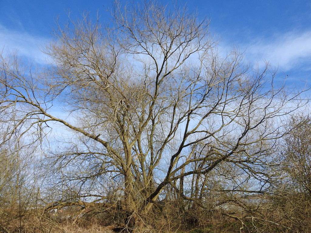 Tree by oldjosh