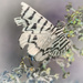 Butterfly 2 by fr1da