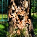 Texture &Colour in this Tree Trunk  ~