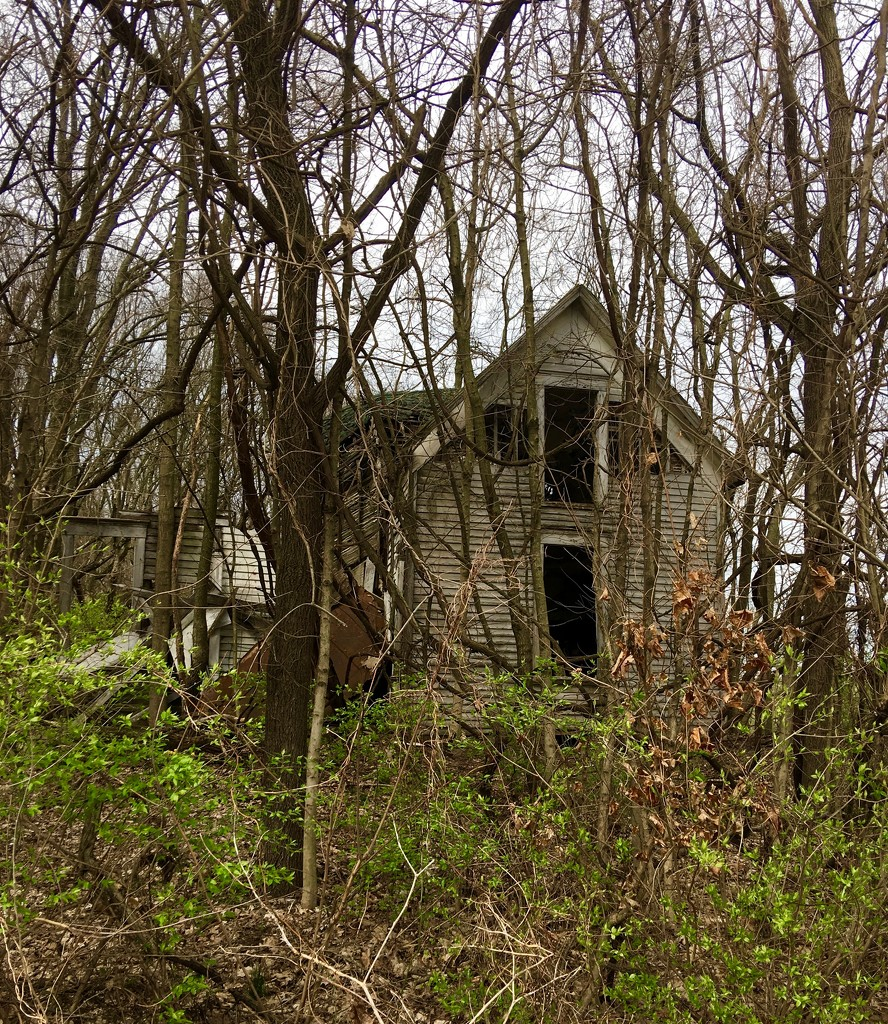 Abandoned and Neglected   by essiesue