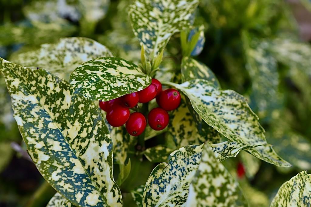 Green 4 by carole_sandford