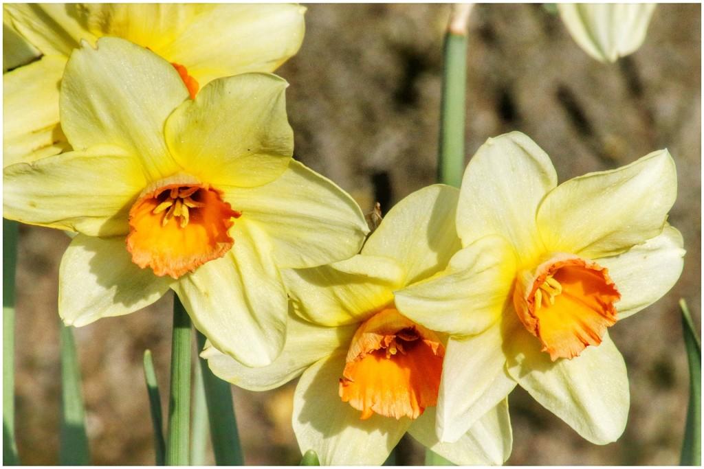 Spring has sprung! by lyndamcg