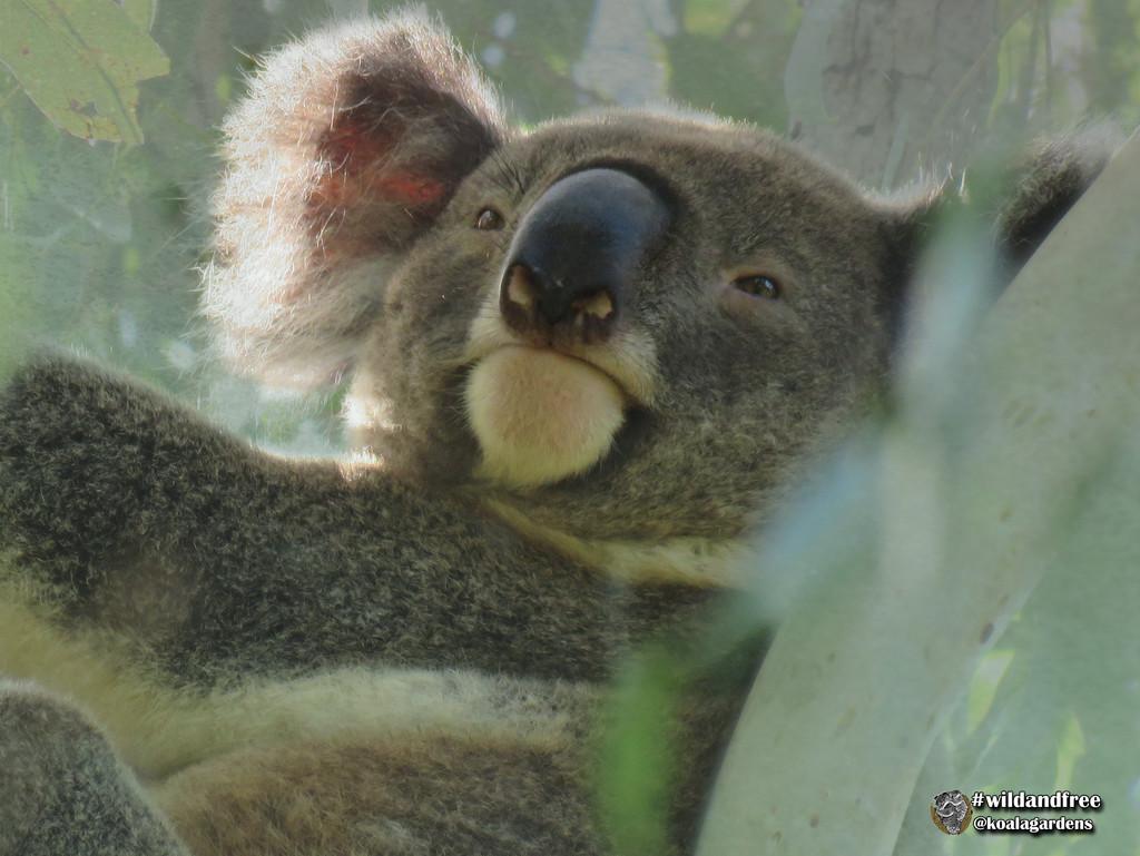 a hero by koalagardens