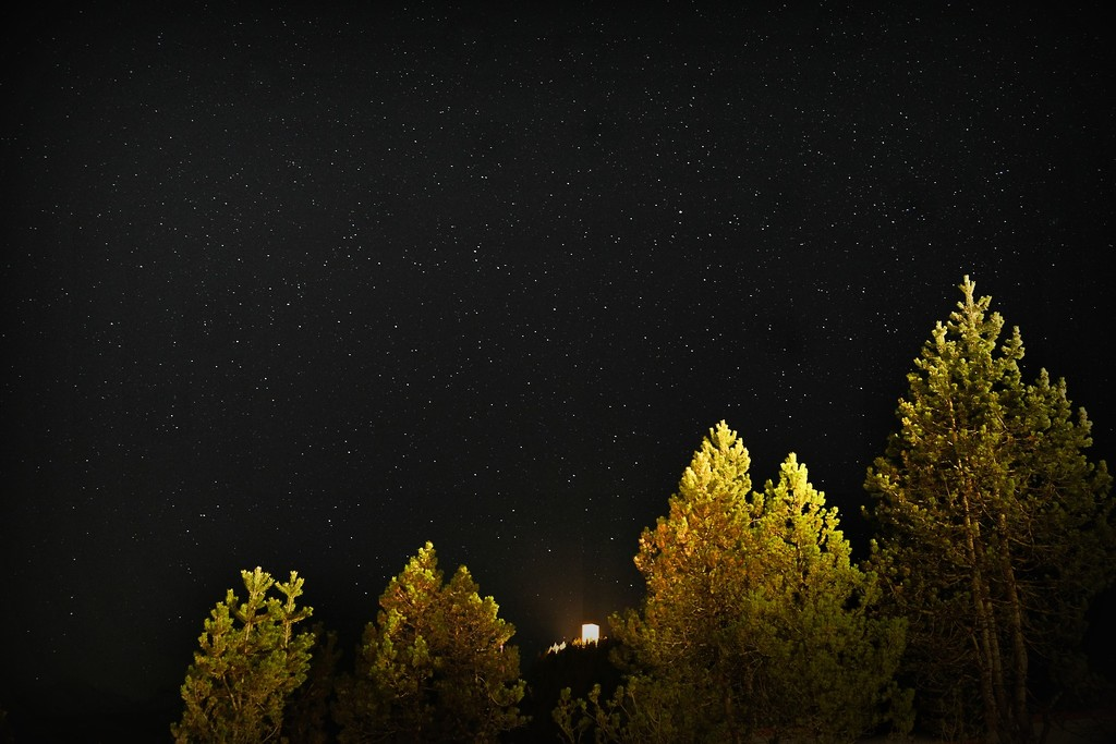 Trees and stars by caterina