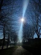 26th Mar 2020 - Row of trees on my walk